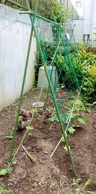 使いまわした支柱で秋野菜を植えている